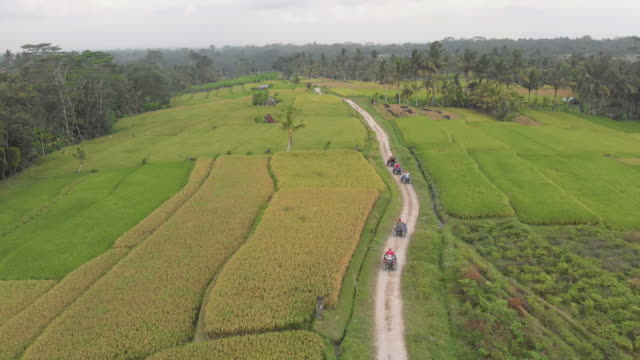 flying over ubud rice paddies in bali, indonesia - quadbike stock videos & royalty-free footage