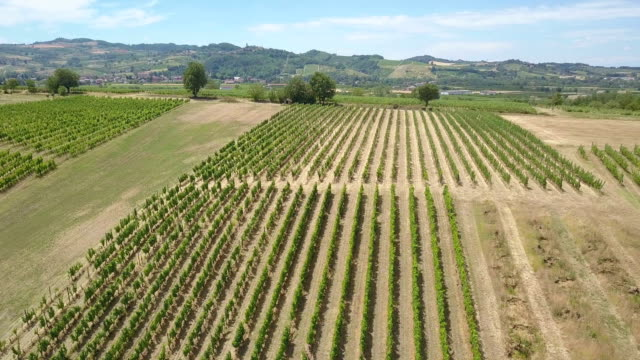 Flying over vineyard in Piedmont - Italy