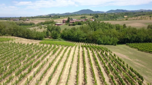 flying over vineyard in piedmont - italy - pjphoto69 stock videos & royalty-free footage