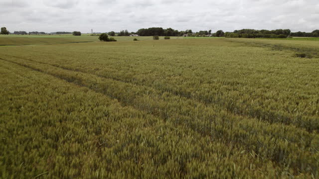 flying over wheat fields - normandy stock videos & royalty-free footage