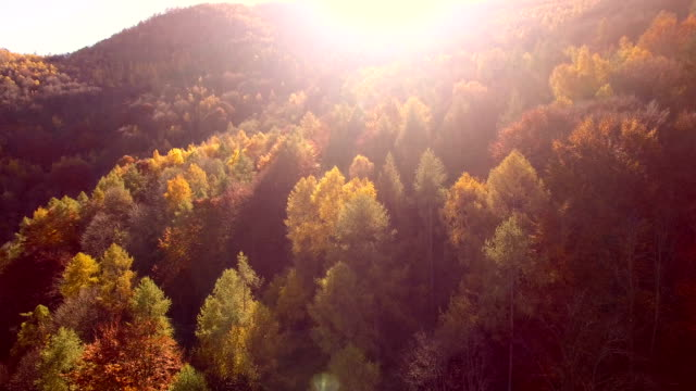 flying over woodlands in autumn - coniferous stock videos & royalty-free footage