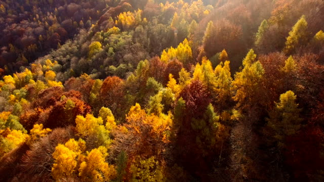 flying over woodlands in autumn - deciduous tree stock videos & royalty-free footage