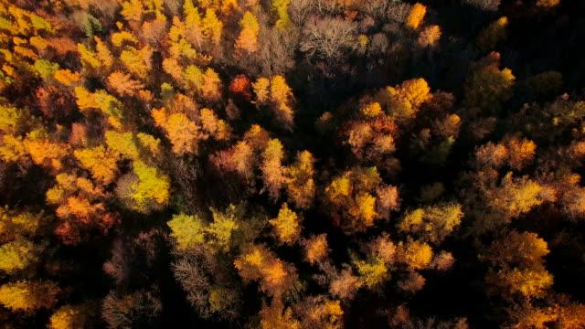 Sorvolare woodlands in autunno