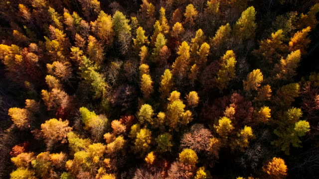 flying over woodlands in autumn - hardwood stock videos & royalty-free footage