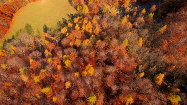 上を飛んで秋の森 - 硬木の木点の映像素材/bロール