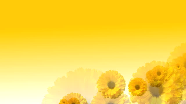 flying over yellow flowers - floral pattern stock videos & royalty-free footage