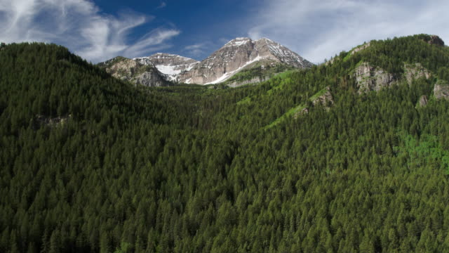 flying past tree top viewing pine tree forest and mountain top. - american fork city stock videos & royalty-free footage
