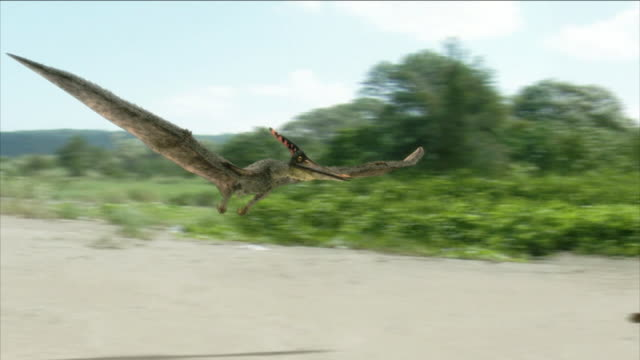 a flying pterosaur drags its wings on the ground in a computer-generated animation. - gliedmaßen körperteile stock-videos und b-roll-filmmaterial