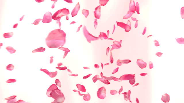 flying rose petals (loopable) - petal stock videos & royalty-free footage