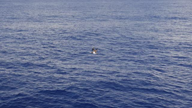 太平洋の海の鳥の飛行