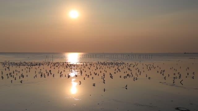flying seagulls during sunset at the beach, bang poo, thailand - バンコク県点の映像素材/bロール