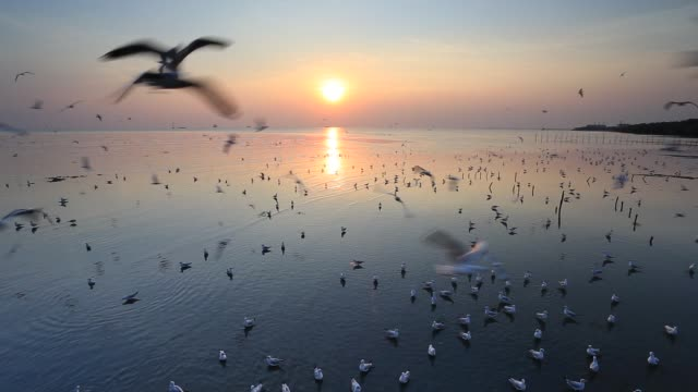Flying seagulls during sunset at the beach, Bang Poo, Thailand