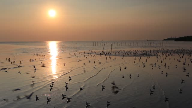 flying seagulls during sunset at the beach, bang poo, thailand - romantic sky stock videos & royalty-free footage