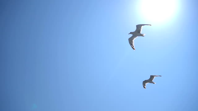 flying seagulls - sea water bird stock videos & royalty-free footage