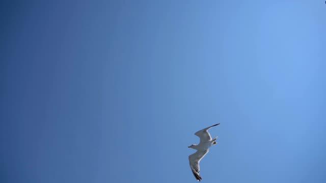 flying seagulls - sea bird stock videos & royalty-free footage
