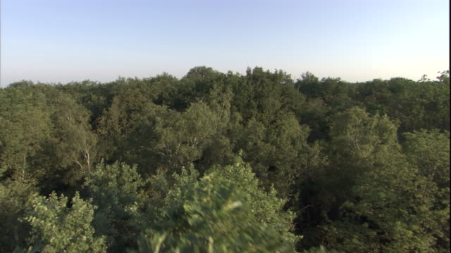 Flying slowly over the treetops of a deciduous forest. Available in HD.