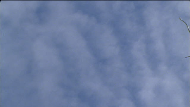 a flying snake falls through a cloudy sky. - snake stock videos & royalty-free footage