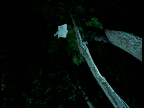 flying squirrel glides over camera, lands on tree and runs up trunk, usa - gliding stock videos & royalty-free footage
