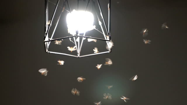 flying termite love light bulb at night - insect stock videos & royalty-free footage