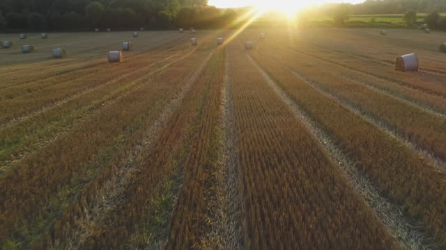 flying through a wheatfield - hay field stock videos & royalty-free footage