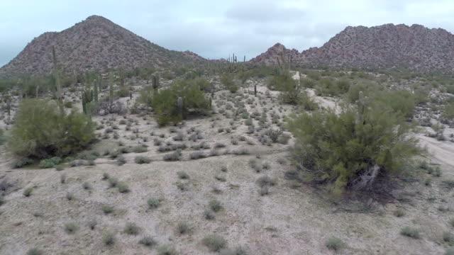 Flying through cactus desert