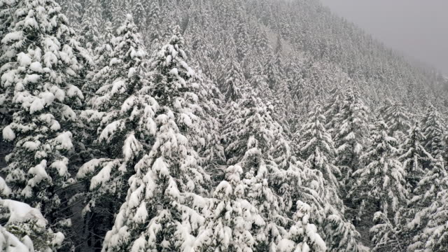 Flying through forest over snow covered tree tops