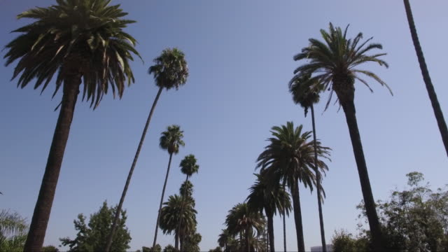 flying through palm trees in beverly hills - beverly hills stock videos & royalty-free footage