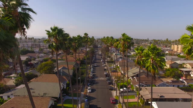 flying through palm trees over a los angeles street - los angeles stock videos & royalty-free footage