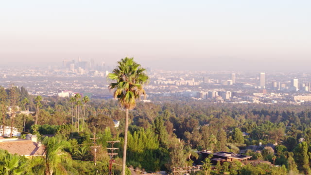 flying through palm trees revealing downtown los angeles - beverly hills stock videos & royalty-free footage