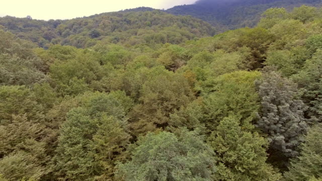 Flying through the green vegetation in a mystical forrest in Iran.