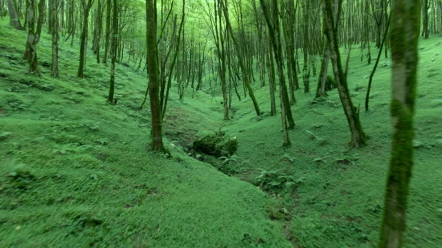 flying through the green vegetation in a mystical forrest in iran. - david ewing stock videos & royalty-free footage