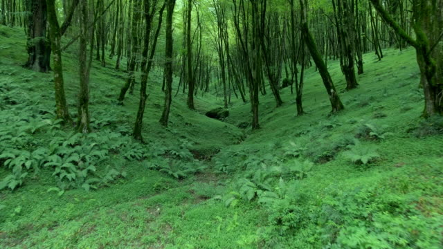 flying through the green vegetation in a mystical forrest in iran. - david ewing bildbanksvideor och videomaterial från bakom kulisserna