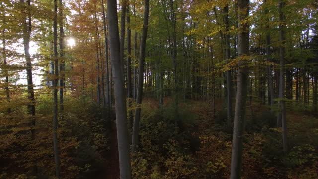 vídeos de stock e filmes b-roll de flying through vibrant autumn forest trees. nature environment ecosystem background - ecossistema
