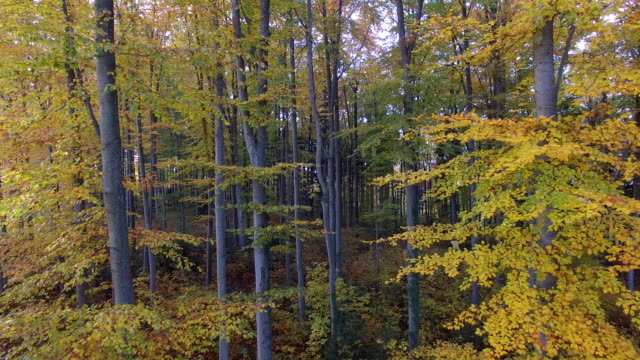 flying through vibrant autumn forest trees. nature environment ecosystem background