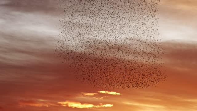 vídeos de stock e filmes b-roll de flying together at sunset - bando de pássaros