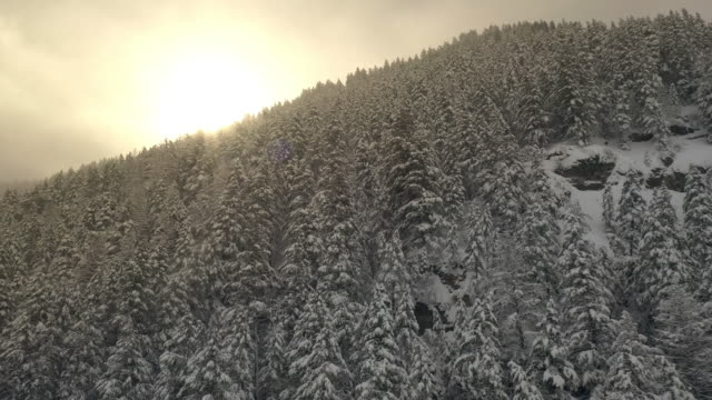 Flying up over forest covered in snow towards the sun