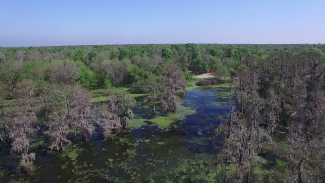 flying up to boat in swamp people on a tour - drone aerial 4k everglades, swamp bayou with wildlife alligator nesting ibis, anhinga, cormorant, snowy egret, spoonbill, blue heron, eagle, hawk, cypress tree 4k transportation - bayou lafourche stock-videos und b-roll-filmmaterial