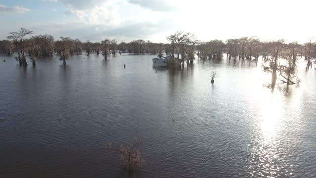 Flying up to houses in flood - Drone Aerial 4K Everglades, Swamp bayou with wildlife alligator nesting Ibis, Anhinga, Cormorant, Snowy Egret, Spoonbill, Blue Heron, eagle, hawk, cypress tree 4K Nature/Wildlife/Weather