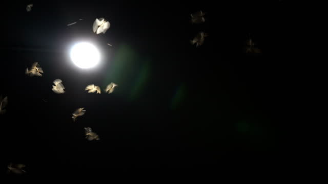 flying winged termites flying into the light - moth stock videos and b-roll footage