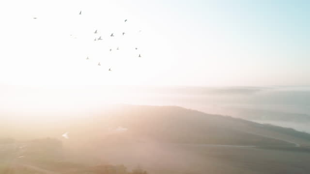 flying with the birds. aerial view. nature and cloudscape. mist and fog over the plains creating simplicity and beauty in the landscape. and a flock of birds flying away. - mindfulness stock videos & royalty-free footage