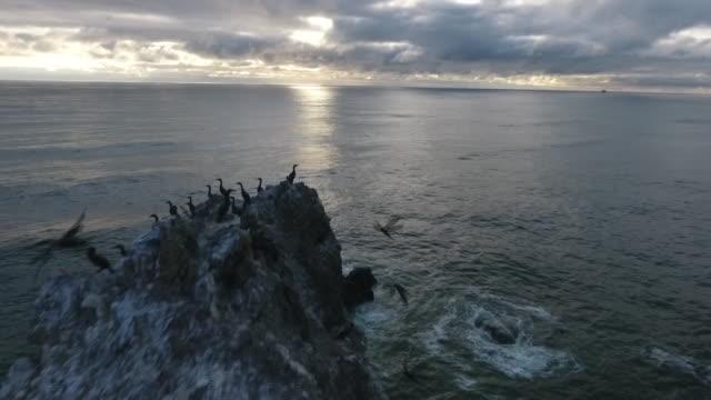 vídeos de stock, filmes e b-roll de flyover aerial drone establishing shot of birds perched on haystack rock sea stack at cannon beach. - costa de oregon