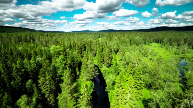 flyover boreal forest - motorway junction stock videos & royalty-free footage