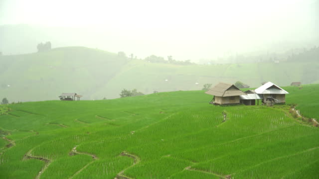 focus beauty view of rice terraced field among raining day