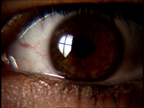 focus close up human eye - braune augen stock-videos und b-roll-filmmaterial