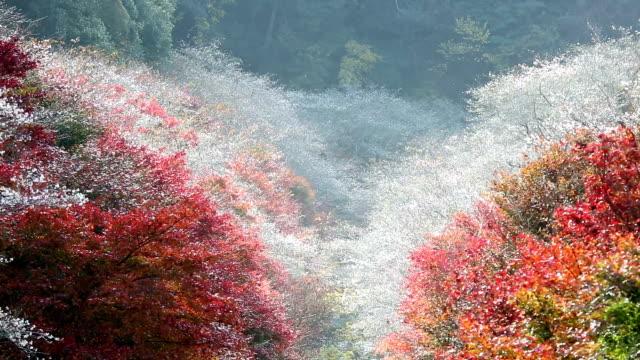 stockvideo's en b-roll-footage met focus in de herfst rood verlof obara toyota nagoya, japan - hd format