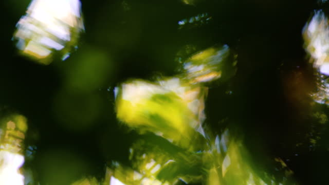 vídeos de stock, filmes e b-roll de focus movement in a tropical forest with leaves and abstract forms. - floresta pluvial