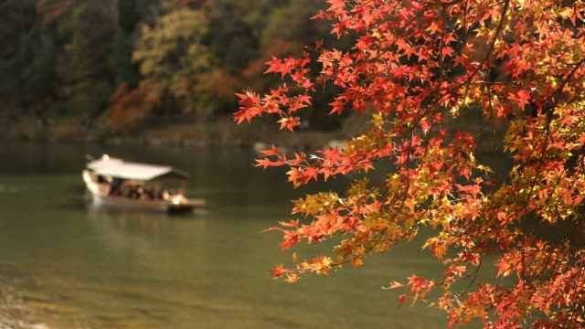 focus on autumn leaf forest at arashiyama and boat in katsura river - autumn leaf color stock videos and b-roll footage