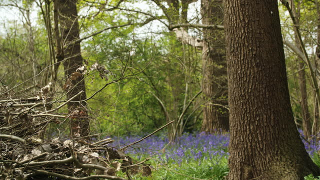 Focus on pile of branches in bluebell woodland