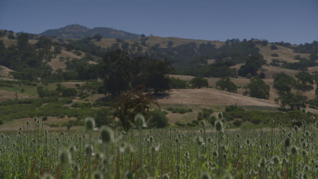 ws focus pull across californian landscape - valley stock videos & royalty-free footage