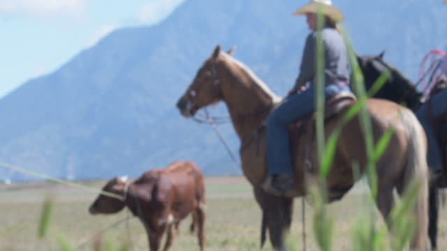 focus pull from foreground gras to young cowgirls on their horses - utah stock videos & royalty-free footage